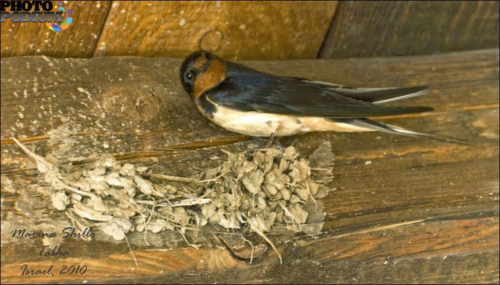 Как сделать так чтобы ласточки не вили гнездо