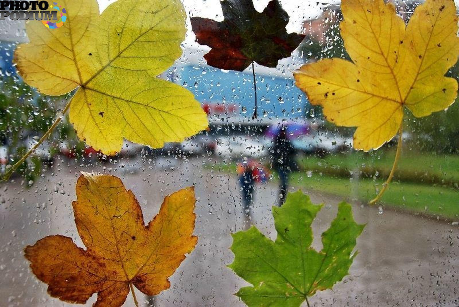 Дождливое осеннее утро понедельника картинки