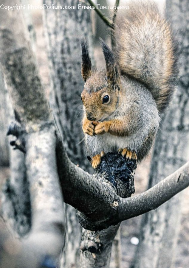 Animal, Mammal, Rodent, Squirrel, Eating, Plant, Tree