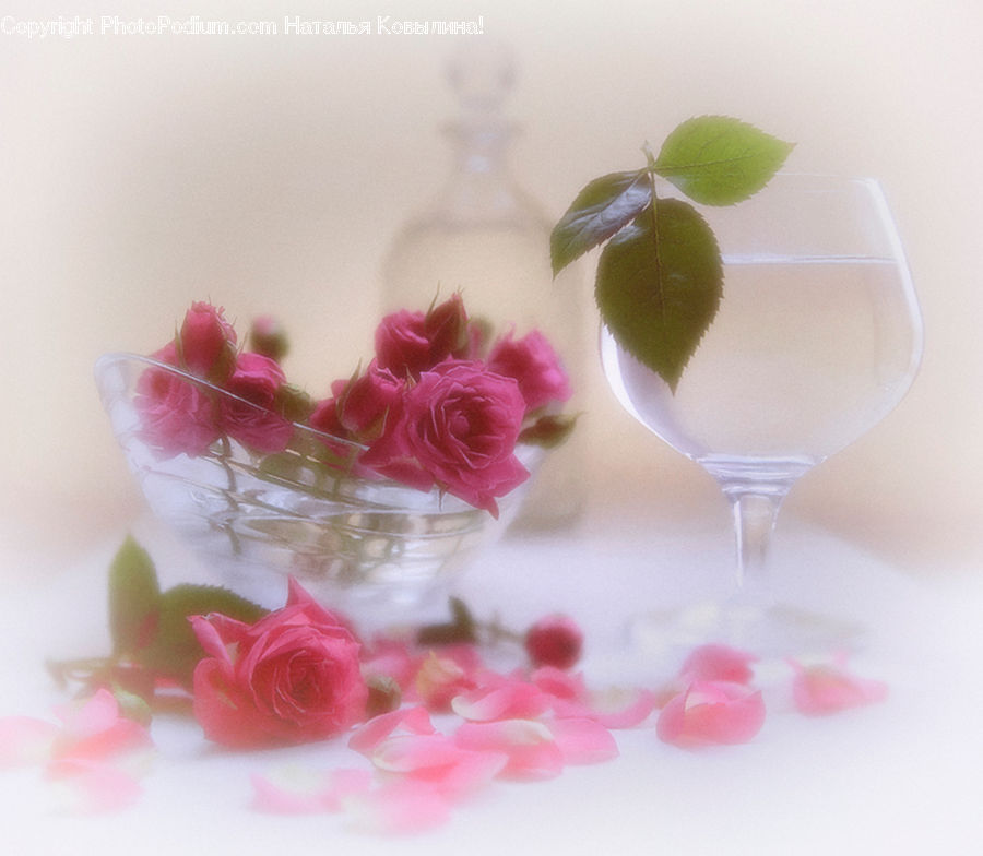Blossom, Flower, Plant, Rose, Glass, Goblet, Leaf