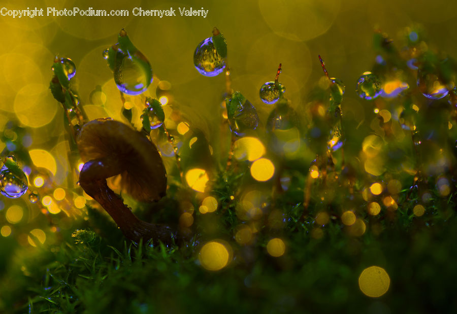 Bubble, Moss, Plant, Sea Life, Aquatic, Water, Blossom