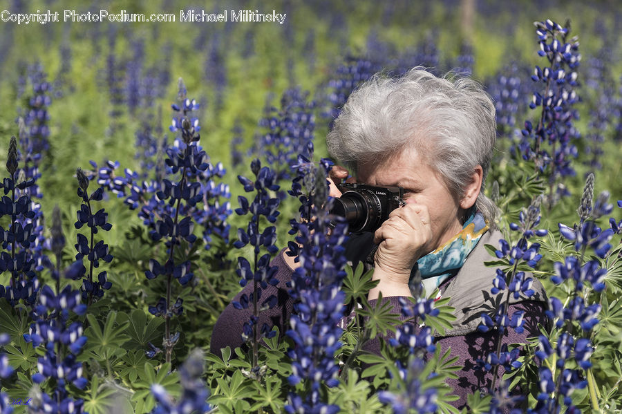 People, Person, Human, Lavender, Plant, Flower, Lupin