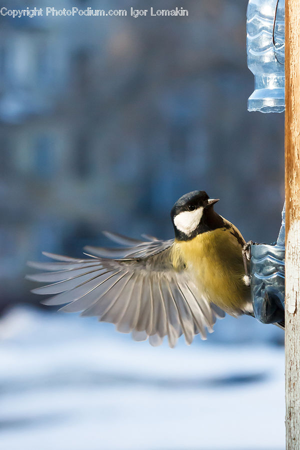 Bird, Magpie, Ice, Outdoors, Snow, Swallow, Duck