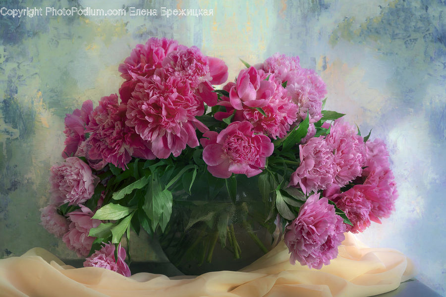 Blossom, Carnation, Flower, Plant, Floral Design, Flower Arrangement, Flower Bouquet