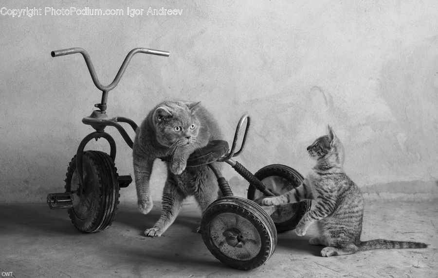 Tricycle, Vehicle, Animal