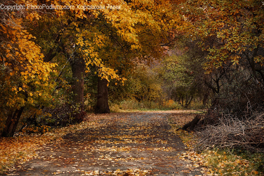Dirt Road, Gravel, Road, Path, Landscape
