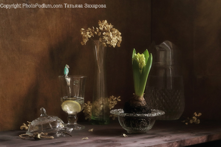 Glass, Goblet, Flora, Jar, Plant