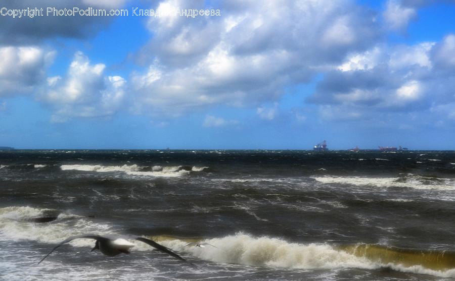 Бактерии в балтийском море