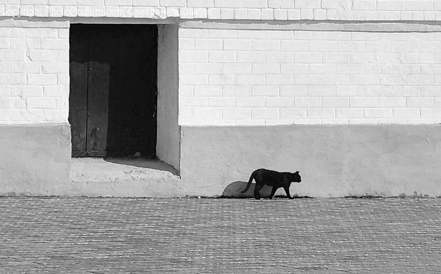 Animal, Mammal, Wildlife, Silhouette, Alley