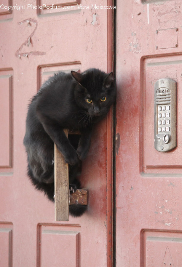 Animal, Black Cat, Cat, Mammal, Pet