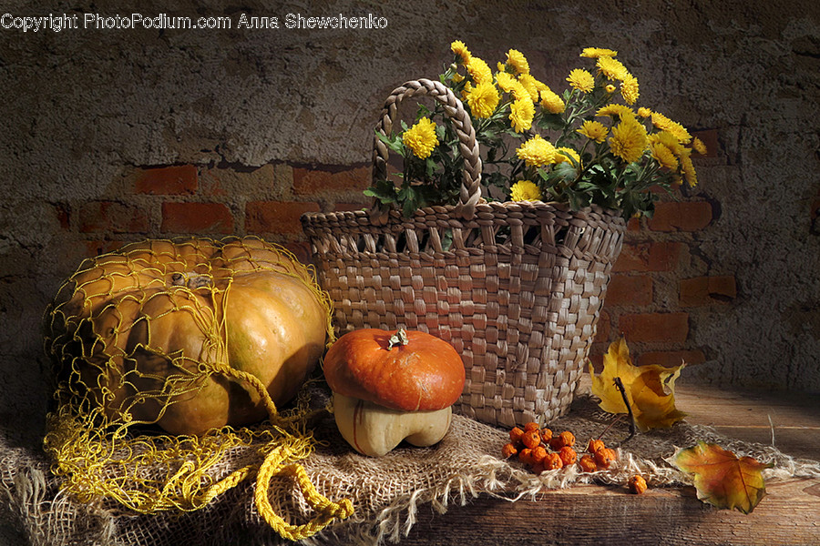 Plant, Produce, Food, Vegetable, Pumpkin