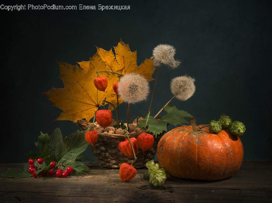 Plant, Leaf, Pumpkin, Food, Vegetable