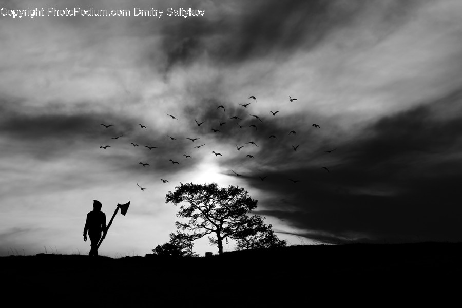 Silhouette, Human, Person, Flock, Animal
