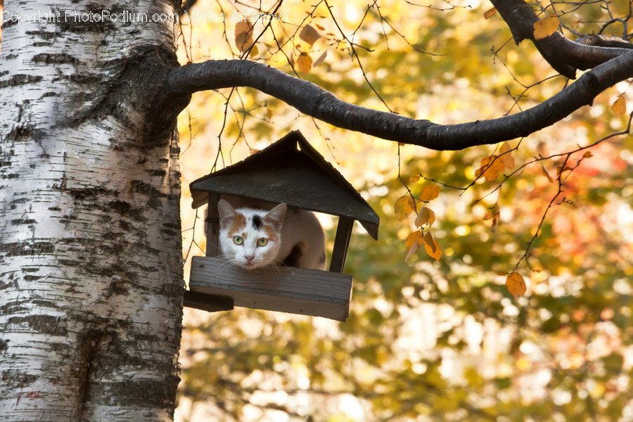 Plant, Tree, Tree Trunk, Bird Feeder, Cat