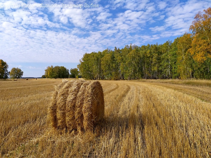 Nature, Outdoors, Countryside, Hay, Straw