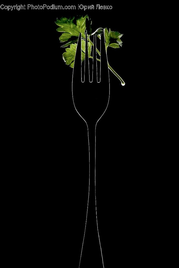 Plant, Fork, Cutlery, Blossom, Flower