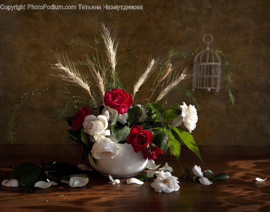 Plant, Flower, Blossom, Flower Arrangement, Flower Bouquet