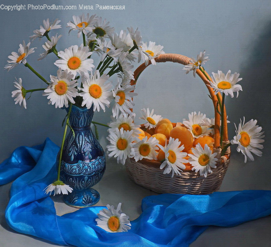 Plant, Flower, Blossom, Flower Arrangement, Daisy