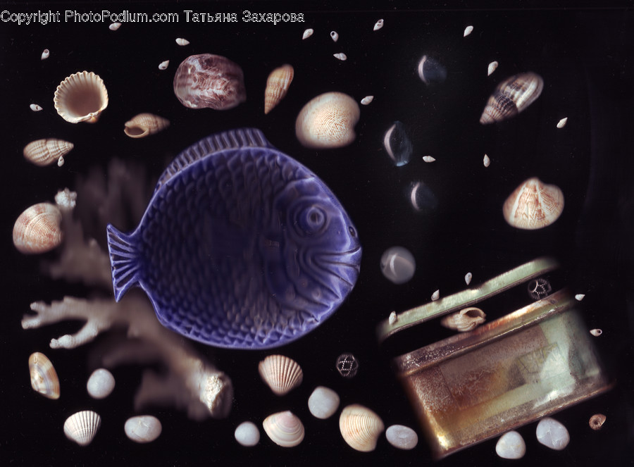 Fish, Animal, Invertebrate, Sea Life, Astronomy