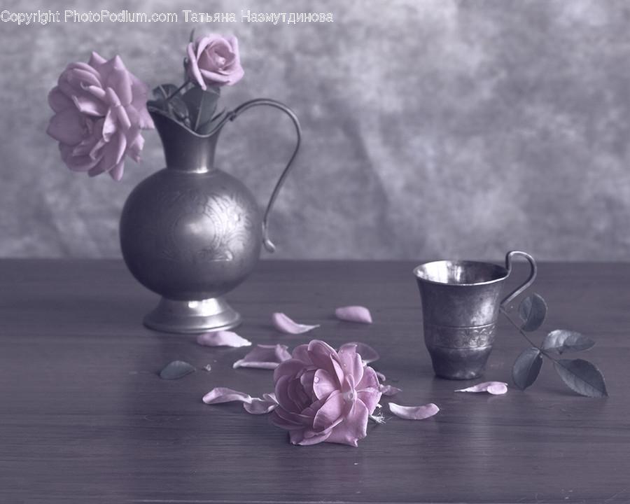 Plant, Flower, Blossom, Petal, Cup