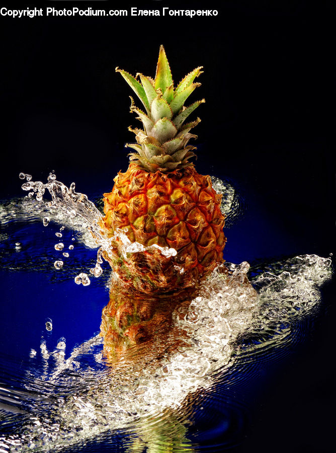Fruit, Pineapple, Water, Conifer, Fir, Plant, Tree