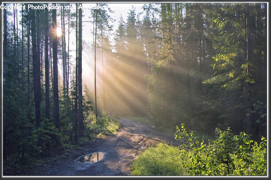 новая фото в лесу после дождя этот