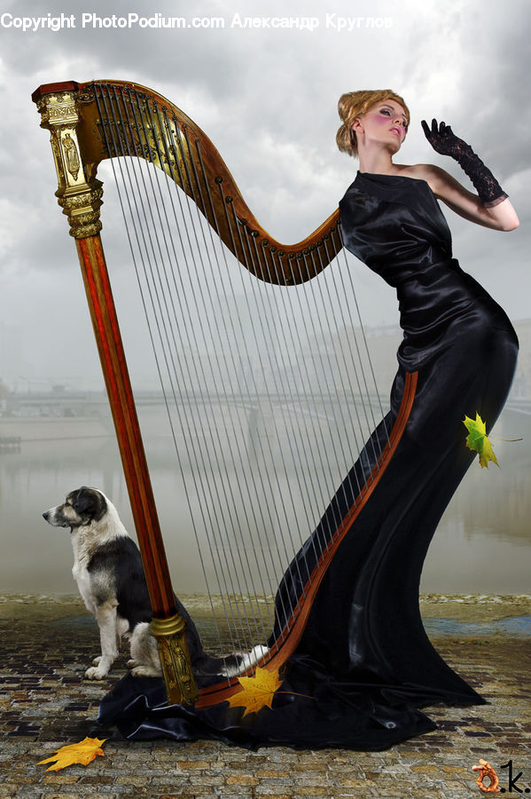 Harp, Musical Instrument, Human, People, Person, Animal, Canine