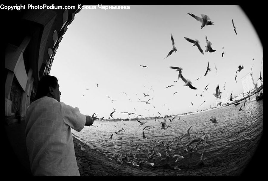 People, Person, Human, Fisheye, Bird, Crane Bird, Heron