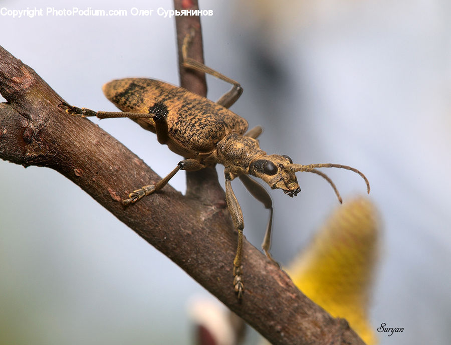Cricket Insect, Grasshopper, Insect, Invertebrate, Amphibian, Frog, Wildlife