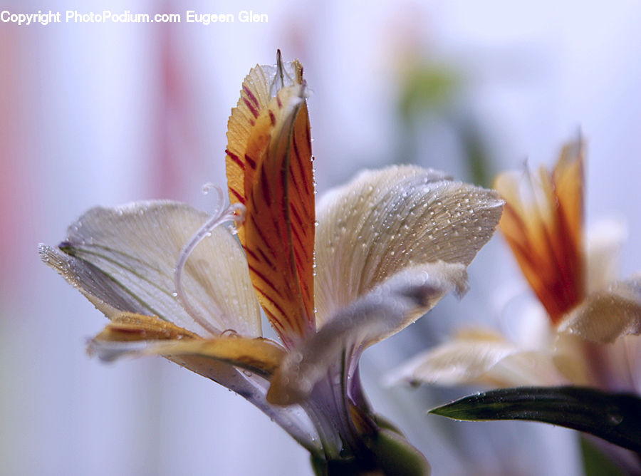 Butterfly, Insect, Invertebrate, Flora, Flower, Gladiolus, Plant