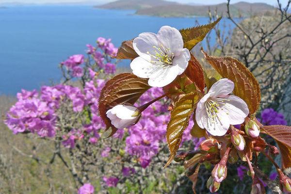 фотографии весна в приморье воспользуйтесь нашим сервисом
